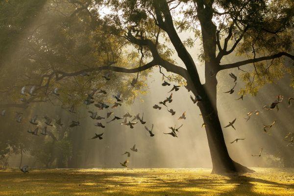 Camera Angle Landscape Tree Of Life Captured