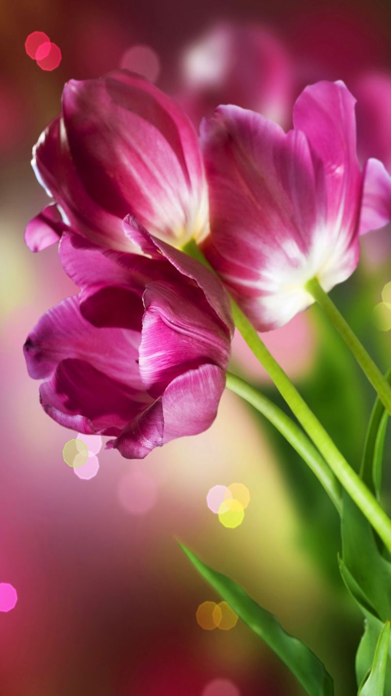 Wallpaper flowers hd for mobile matatarantula http www vactualpapers com gallery beautiful flowers mobile hd voltagebd Images