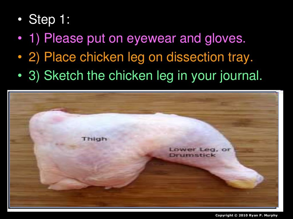 Chicken Leg Dissection Powerpoint Muscular System