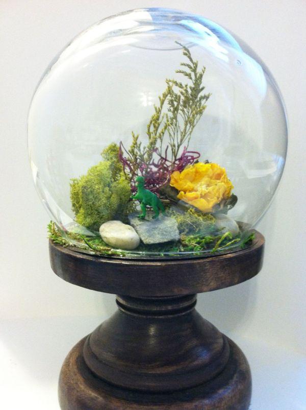 Diy Terrarium Kit - Glass Dome Wood Stand