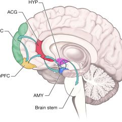 Orbital Frontal Dorsal Lateral Brain Diagram Parts Of The Insula Wiring For Chevy Truck Tail Lights Inhibiting Fear And Aggression Ventromedial Pre
