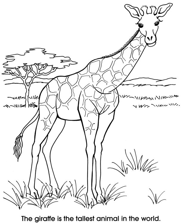 Welcome to Dover Publications Zoo Animals Coloring Fun