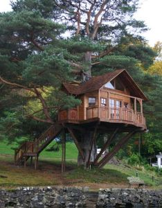 Jungle architecture also best tree houses images on pinterest rh