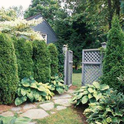 evergreen privacy screens