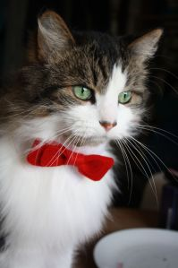 Cat Bow Tie | Cat, Cat bow tie and Kitty