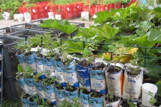 Mobile Urban Agriculture Blooms In Berlin's Prinzessinnengarten