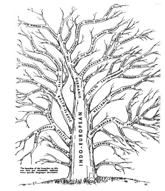 Indo-European Tree with a curious representation of
