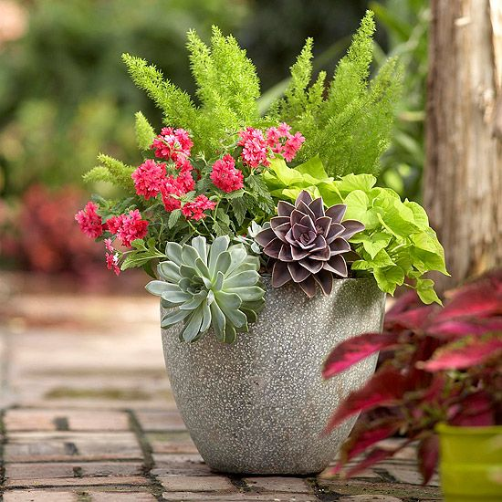 24 Patio Perk Ups Flower Plants And Planters