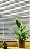 Schön Gardinen Blumenfenster Design