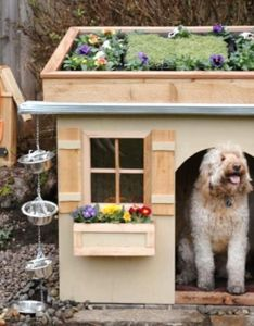 Five inviting diy doghouses adorable roof top garden on this dog house more like charming doggie cottage also best images about houses and beds pinterest hunters rh