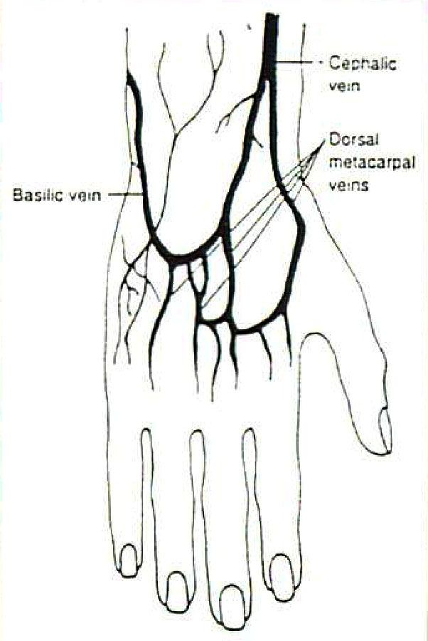 Veins in the hand for IV site selection. Even if you