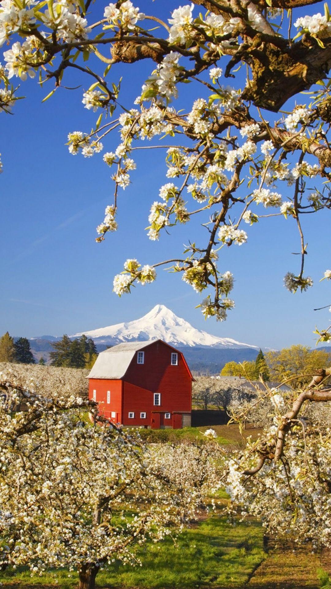 Country Living Spring Flowering Trees Barn Loving