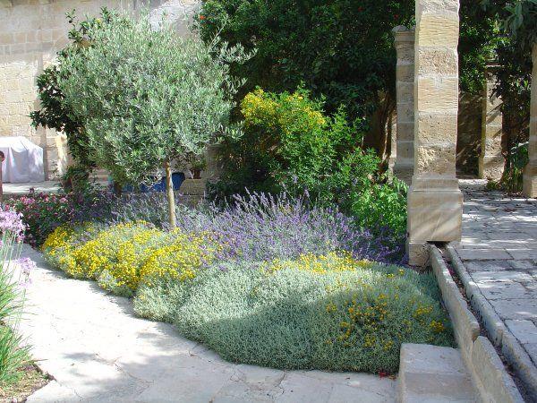 Santolina Lavender Tulbaghia Westringia Phoenix Roebellenii