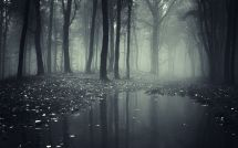 Creepy Forest Dark Hd Wallpapers