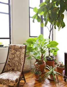 Another image from ariel dearie   plant filled apartment the chair is an old sewing cornice pieces were salvaged by dad  also light  dhappy garden pinterest lights plants and gardens rh