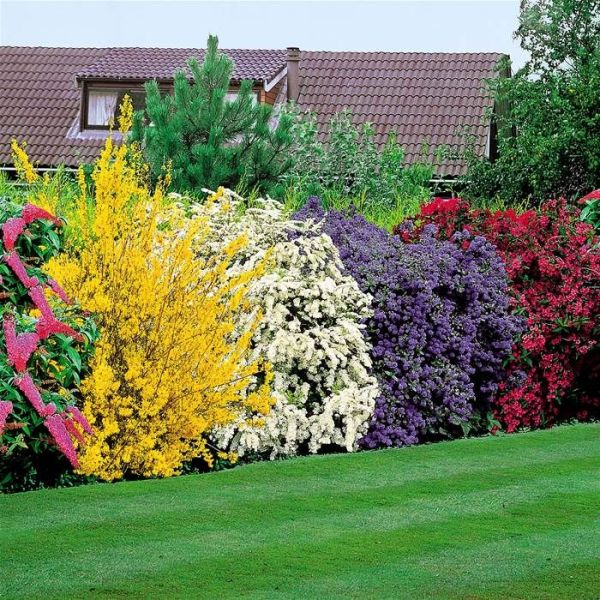 5 beautiful bushes plant