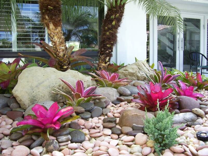 Gardening In South Florida Bromeliads In The Garden Flower And