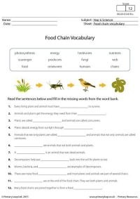 PrimaryLeap.co.uk - Food Chain Vocabulary Worksheet ...