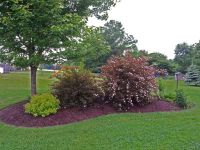 island berm planting using natives | Landscaping by ...
