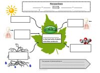 Photosynthesis and Cellular Respiration Graphic Notes ...