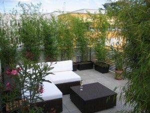 Pflanzen Als Naturlicher Sichtschutz Auf Dem Balkon
