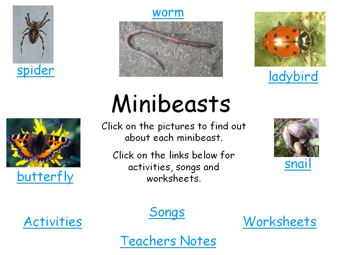 A Study Of Minibeasts Using Powerpoint And Smart Notebook