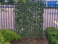 Instant Living Fence with Climbing Ivy | Privacy for ...