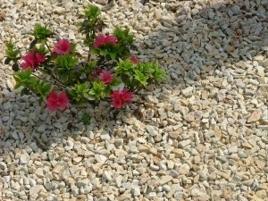 Decorative Stone Garden Ideas Pinterest Stones