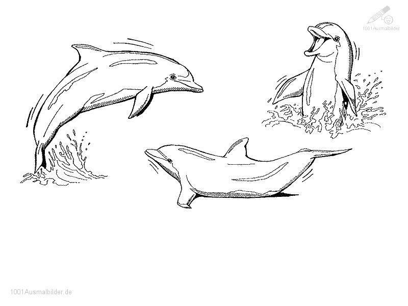 Delphin malvorlage - Ausmalbilder für kinder … Pinteres…
