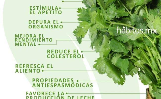 Beneficios Del Cilantro Salud Pinterest Cilantro