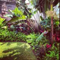 Tropical garden - great for along back fence?: | Tropical ...