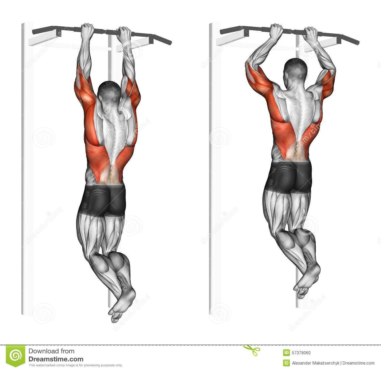 chin muscles diagram simple cycle power plant exercising pull ups brachialis bodybuilding target
