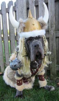 Viking Halloween Dog Costume   Dog Halloween Costumes ...