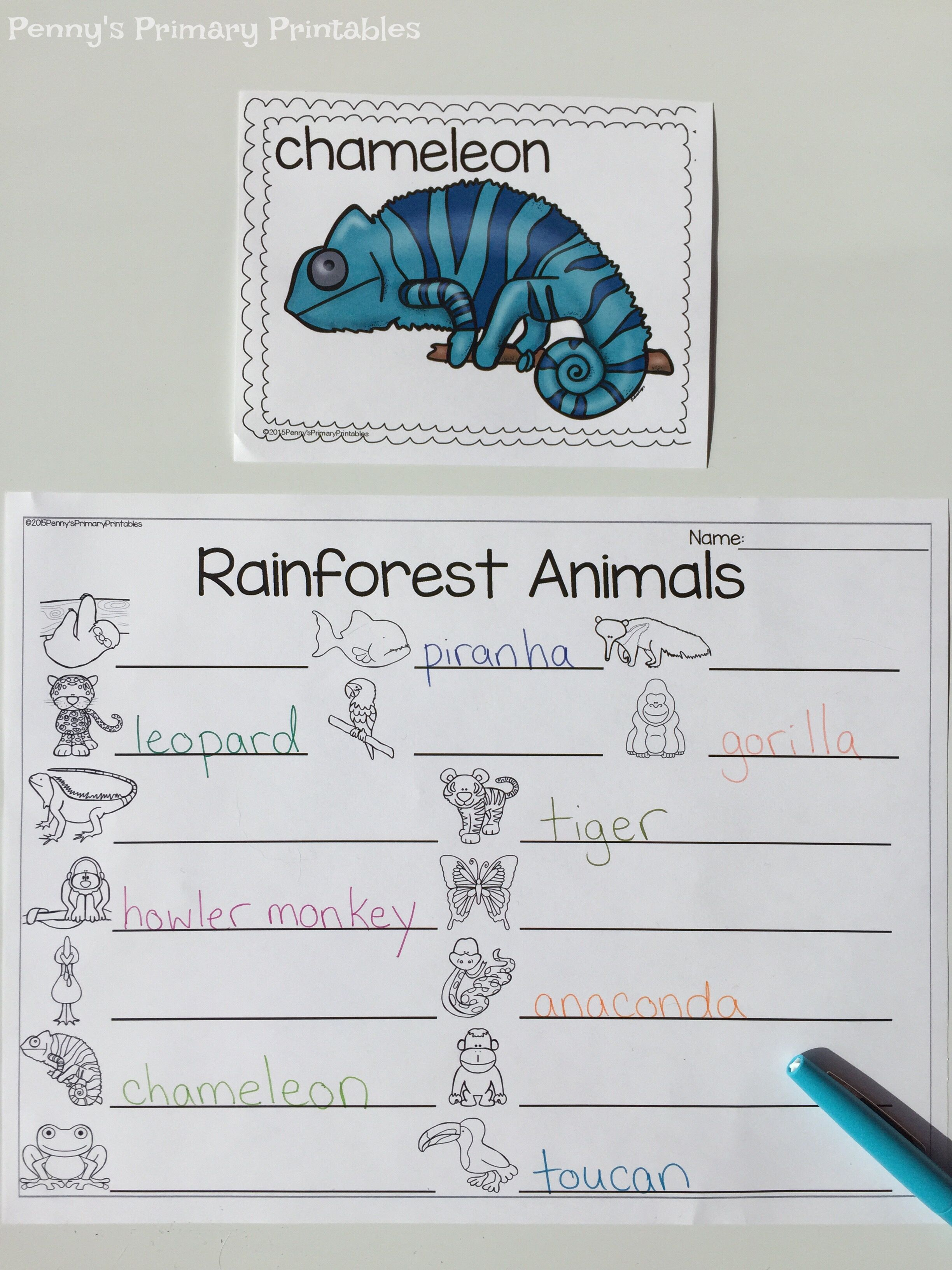 All About Rainforest Animals Practice Reading And Writing Rainforest Animal Words In This Great