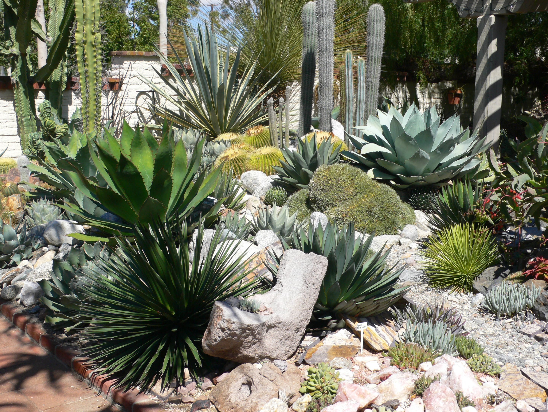 Succulent Cactus Garden Garden Ideas Pinterest Gardens