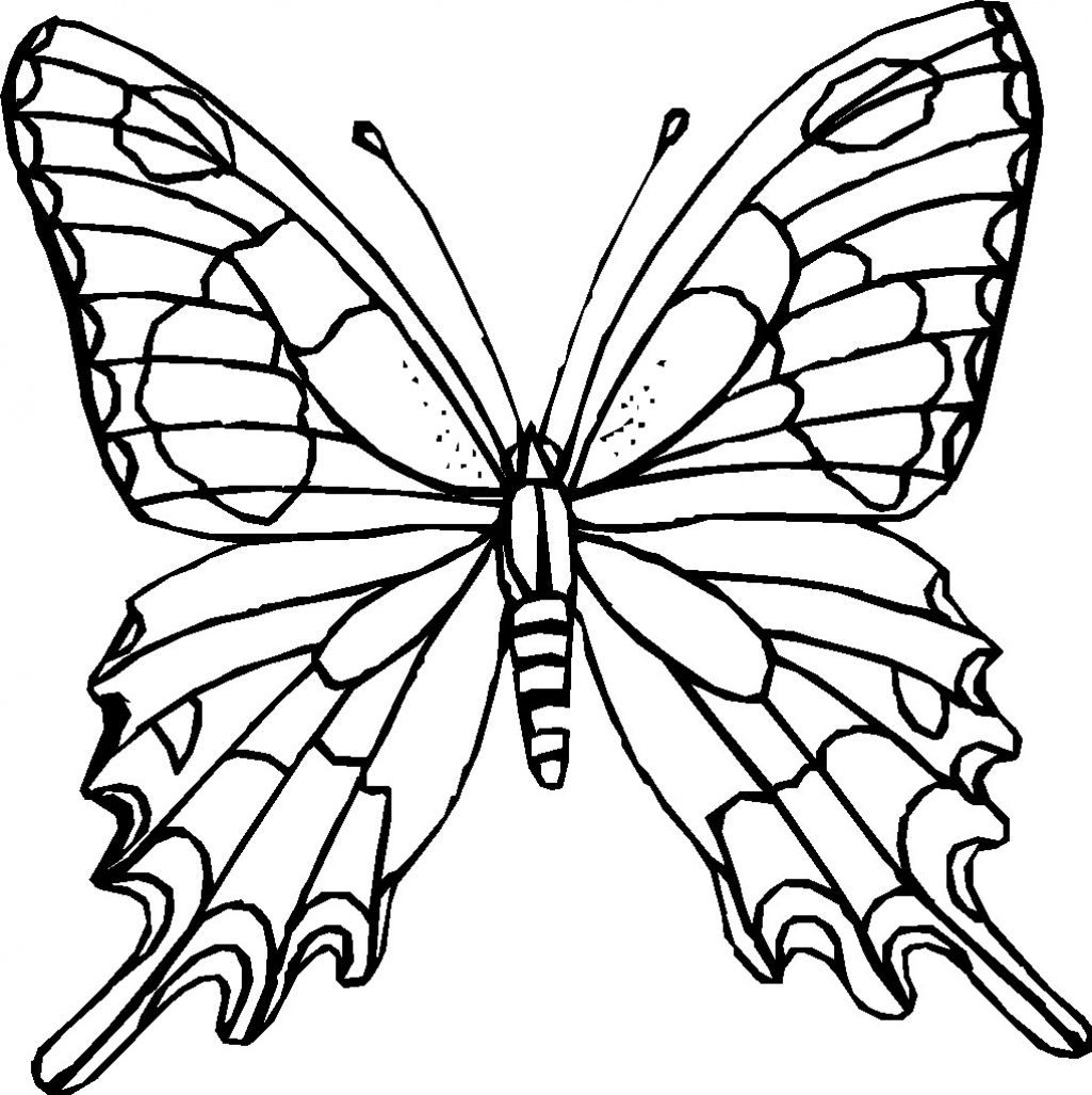 Free Coloring Pages Butterflies Clipart Best Coloring Pages
