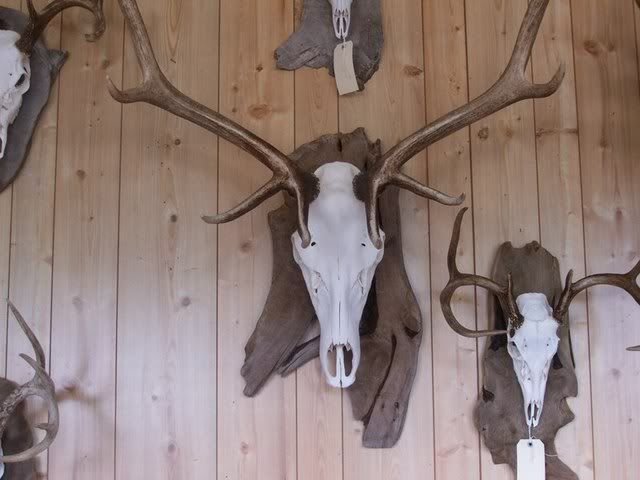 European Mount Deer Skull Plate