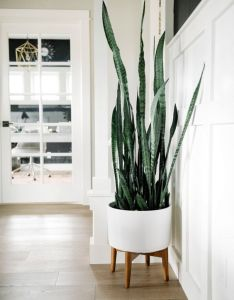 also clever ways to hang your plants rh pinterest