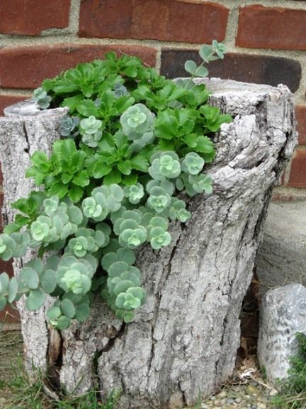 Tree Trunk Planter Would Be Nice Nestled Into The Garden Bed
