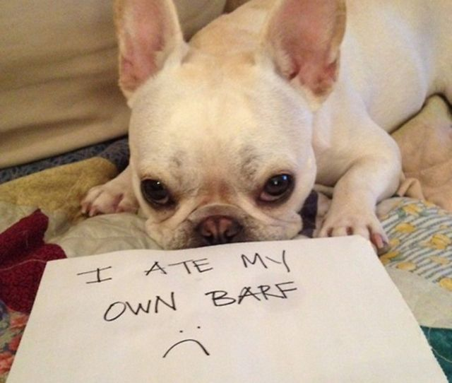Of The Most Hilarious Pet Confessions