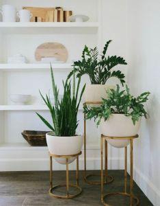 inspiring indoor plants decor ideas to makes your home more cozierhomedecorish also rh in pinterest
