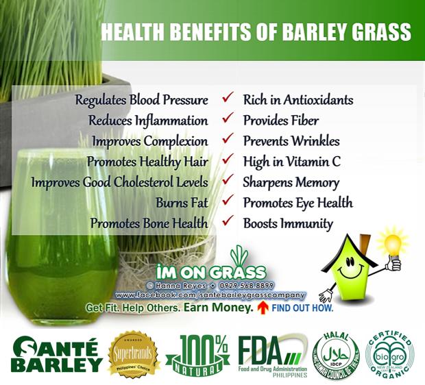 Health benefits of barley grass | Sante Barley | Pinterest ...