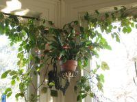 House Plants Decoration Ideas | www.imgkid.com - The Image ...