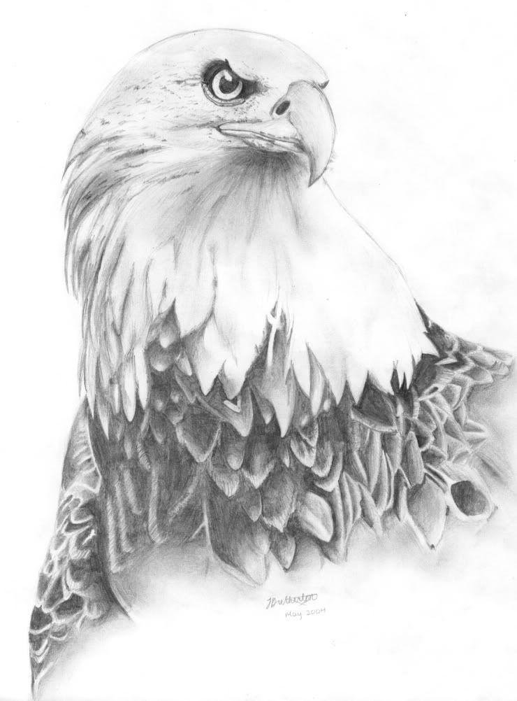 Pencil Drawings Bird Pencil Drawings My Art Ideas