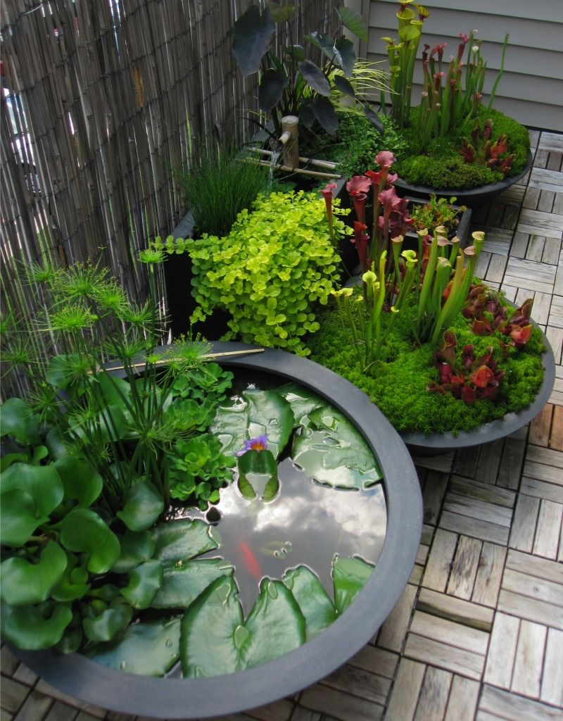 Container Ideas Small Garden Water