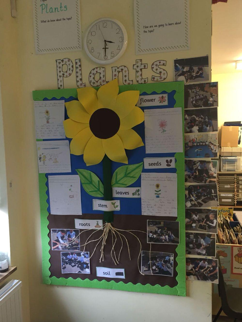 Plants display ks1