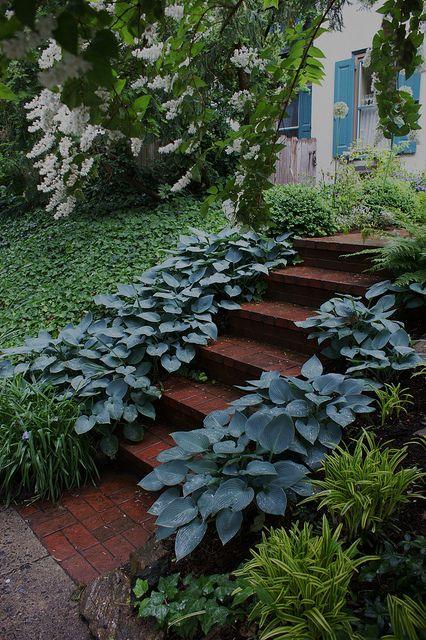 blue hosta edging gardens