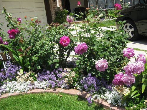 A Pretty Small Garden Bed With Roses And Annuals A Walk Through
