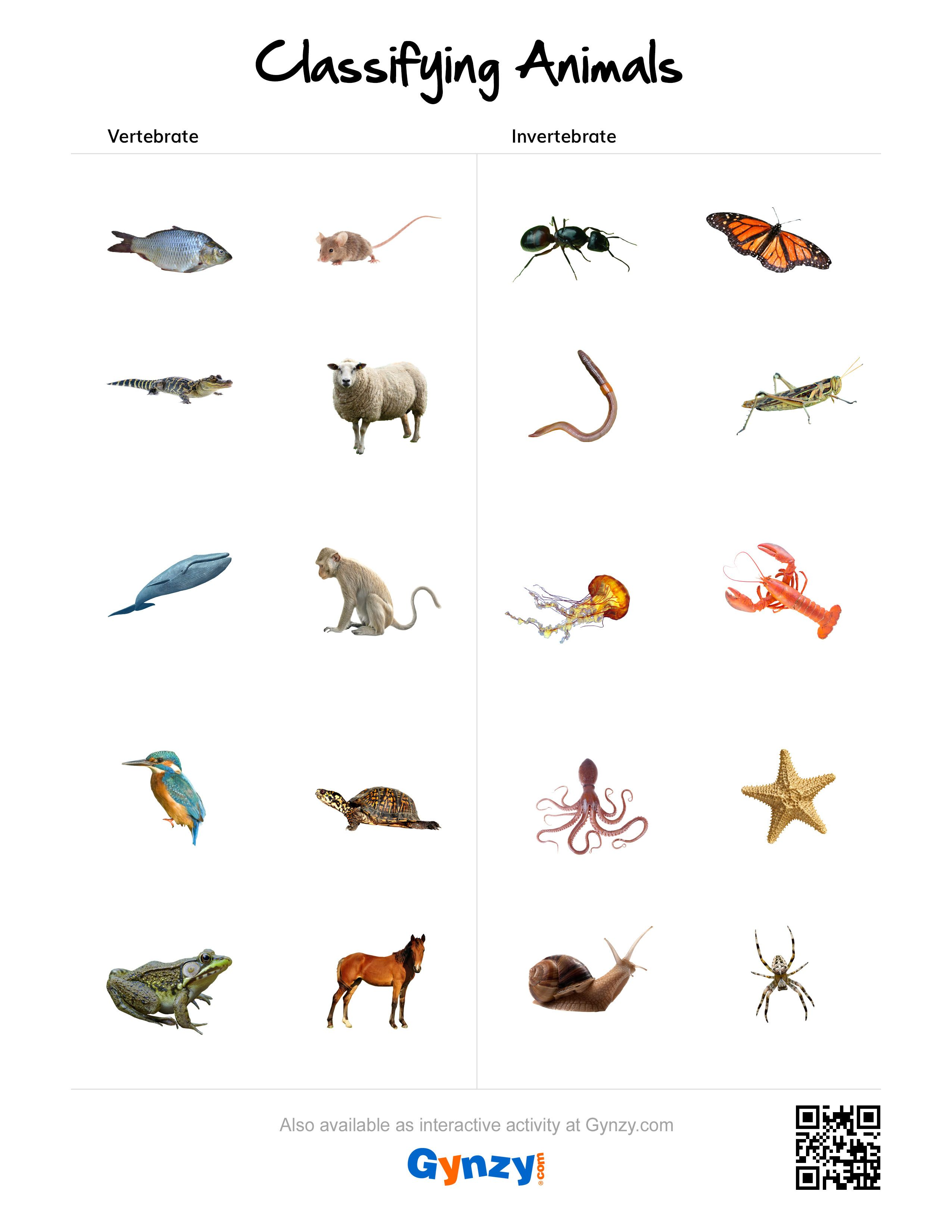 Uncategorized Vertebrates And Invertebrates Worksheets