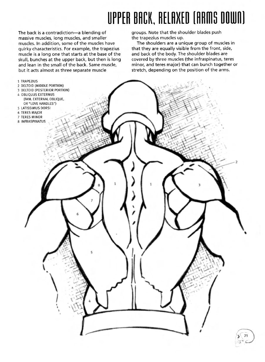 drawing cutting edge anatomy the ultimate reference for